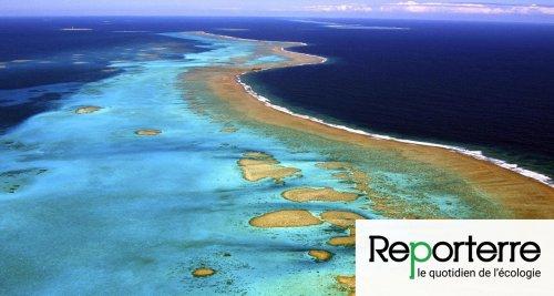 Nouvelle-Calédonie : en mer de Corail, une biodiversité mal protégée