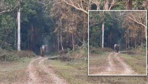 'Seems to be a model': Video of elephant's beautiful walk leaves netizens impressed