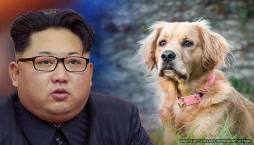 North Koreans ordered to hand over pet dogs to solve food shortage: Report