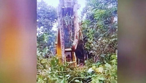 Massive snake lifted by crane from rainforest, netizens call it 'World's biggest snake'
