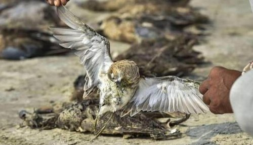 Thousands of seabirds found dead along coasts in United Kingdom: Report