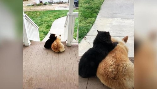 This dog and cat dubbed 'Neighbourhood Besties' by netizens are internet favs; see why