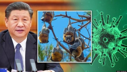 China discovers new batch of Coronaviruses in bats, one strain closest to COVID after RaTG