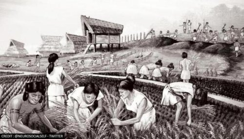 Study discovers Modern-day Japan descended from 3 ancient cultures rather than 2