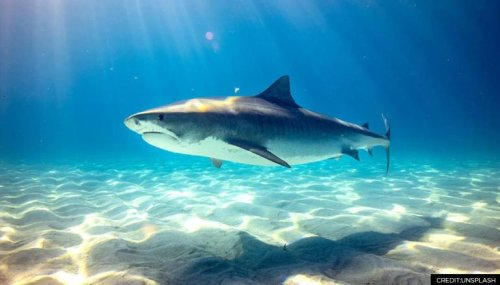 Scientists identify new species of ancient shark from 150 million-year-old-fossil