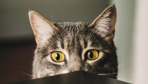 'Dagger-eyes': Cat's killer expression to human cuddling dog leaves netizens amused