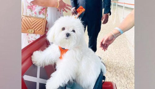 Woman books entire Air India business class cabin for pet dog's flight journey