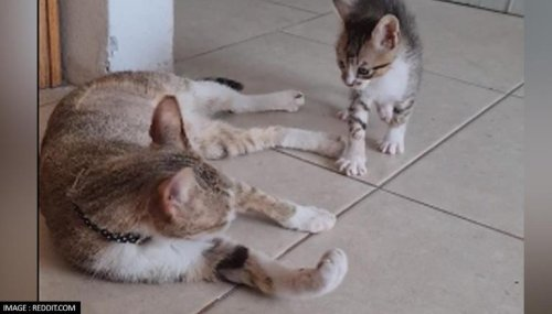 Social media user rescues pregnant cat, adopts both mama and kitten; Watch as the duo play