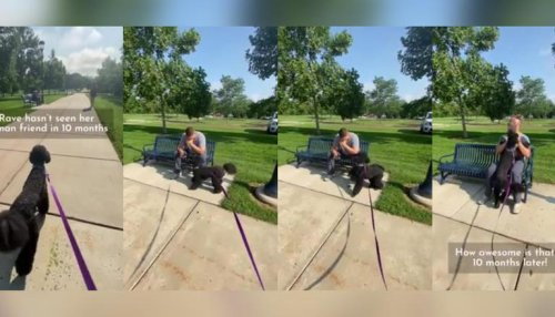 Dog meets human pal after 10 months: Watch her adorable reaction in viral video