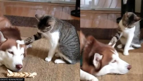Cat testing dog's patience in a viral video shows friendly banter between the two, Watch