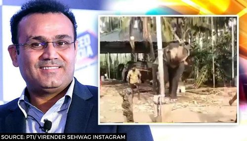 Virender Sehwag amazed at elephant perfecting inside-out cover drive in viral video: WATCH