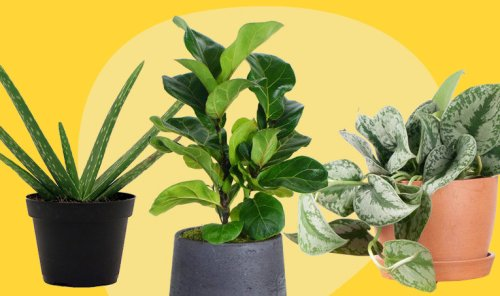 The 10 Best Houseplants to Invest In and Where to Buy Them
