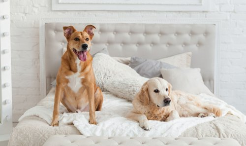 The Best Pet-Friendly Hotels and Chains