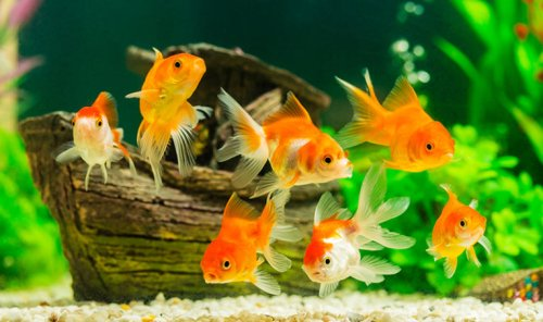 Fish Goals: How to Create the Aquarium of Your Dreams at PetSmart