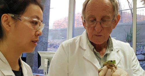 Frog whisperer: Australian scientist speaks to frogs, fears their silence