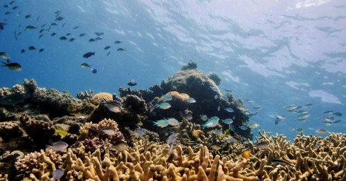 """UNESCO keeps Great Barrier Reef off """"in danger"""" list after Australian lobbying"""