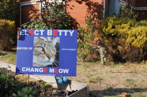 Change Meow: the California neighborhood where dogs and cats are vying for mayor