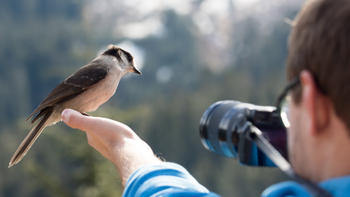 This App Listens to Bird Calls and Tells You What They Are