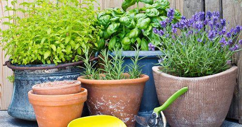 Cómo mantener VIVO tu jardín de ESPECIAS