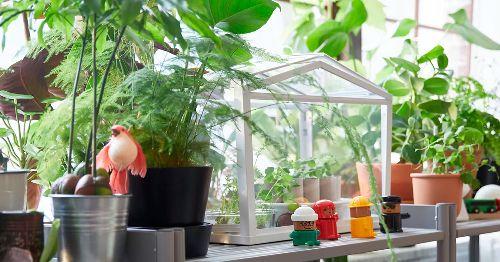Estas hierbas y especias ASIÁTICAS se pueden COSECHAR en casa
