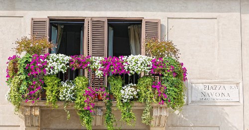 Las mejores plantas y FLORES para colocar en tu BALCÓN o ventana