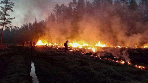 Russia's Forest Fire Damage Worst Since Accurate Recording Began, Greenpeace Says