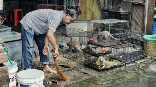 L'OMS demande la suspension du commerce de mammifères sauvages vivants sur les marchés