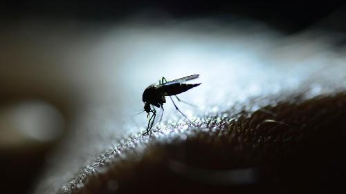 Priorité santé - Le paludisme