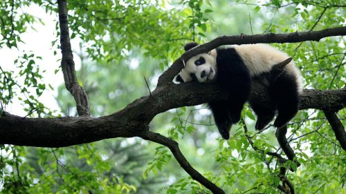 UN biodiversity talks in China end in funding pledges to reduce loss of species