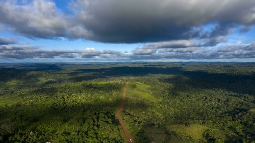 French supermarket giant Casino sued over links to Amazon deforestation