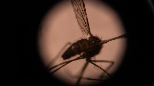 'Landmark' step in malaria vaccines as first trial meets WHO target