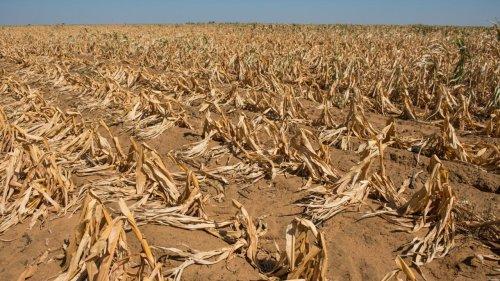Réforme agraire en Afrique du Sud: la Chambre des provinces donne son feu vert