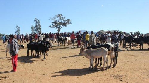 Madagascar: les femmes et les enfants, premières victimes des dahalos