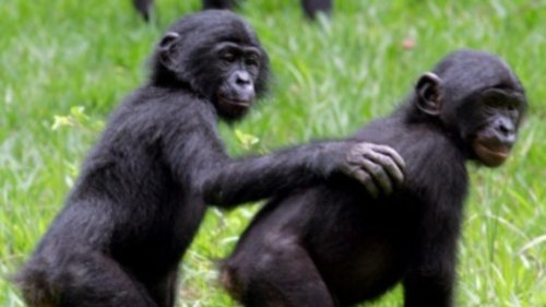 RDC: un arrêté autorise l'abattage d'espèces protégées, l'ICCN n'était pas au courant