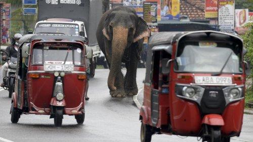 Le Sri Lanka vit sa pire récession depuis son indépendance de l'île
