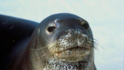 En Grèce, la mort du phoque Kostis, tué par un harpon, provoque l'indignation