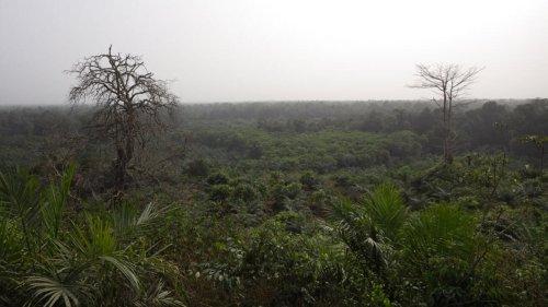 La Côte d'Ivoire préoccupée par la disparition de ses forêts