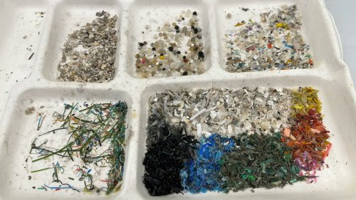 Scientists say bacteria could help solve microplastics pollution nightmare