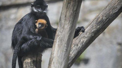 C'est dans ta nature - L'instinct maternel chez les animaux (rediffusion)