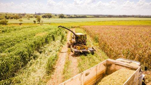 Chronique des matières premières - Le Brésil prévoit de battre des records de production de grains