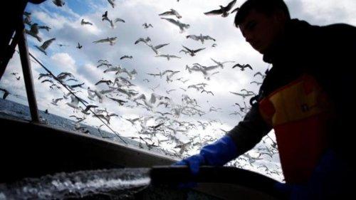 Brexit: les pêcheurs français n'ont plus accès aux eaux de Jersey