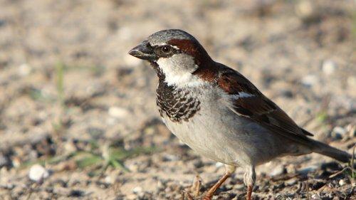 La Terre compte environ 50 milliards d'oiseaux d'après une étude inédite