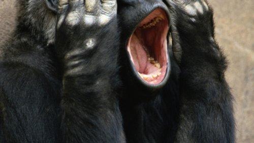 Gabon: nos amies les bêtes à l'honneur du concours littéraire «BICIG-Amis des arts»