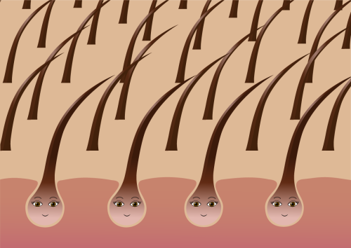 A recipe for cyclical regeneration of bioengineered hair