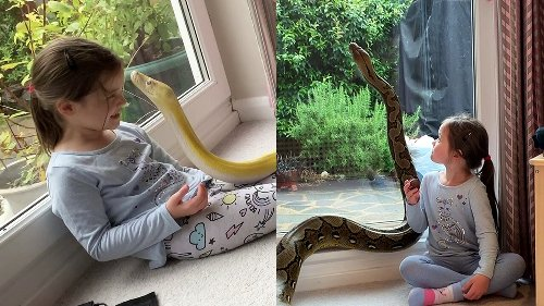 This little girl is best friends with two 15-foot pythons