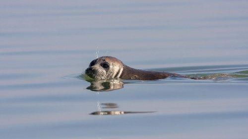 170 tote Robben am Kaspischen Meer entdeckt