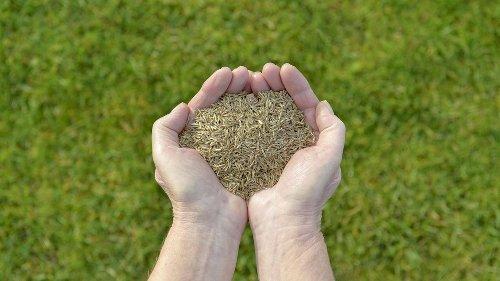 Rasen wächst nicht? Tipps für optimales Rasenwachstum