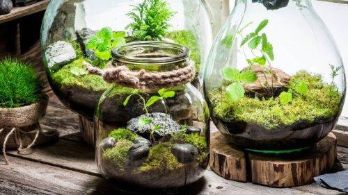 Flaschengarten selbst anlegen: Schritt für Schritt zum eigenen Mini-Biotop