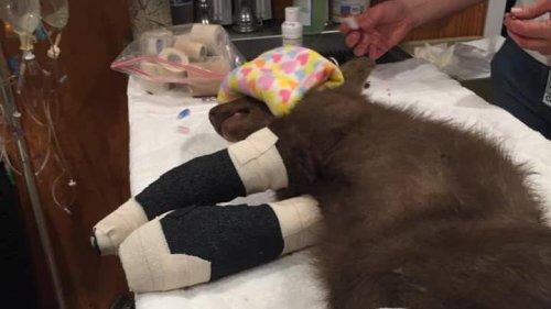 Tatzen verbrannt: kleiner Bär vor Feuer in Kalifornien gerettet