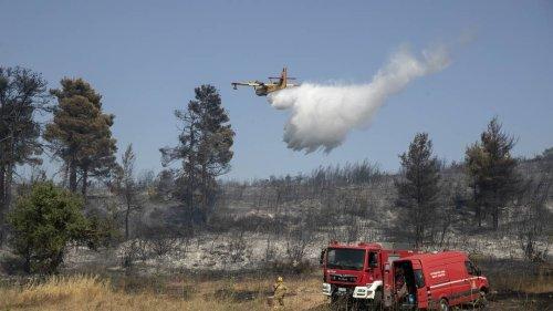 FDP fordert deutsche Löschflugzeuge für die Waldbrandbekämpfung in Europa